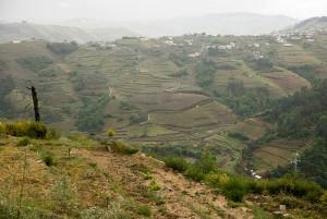Weinanbau Portugal Douro Tal